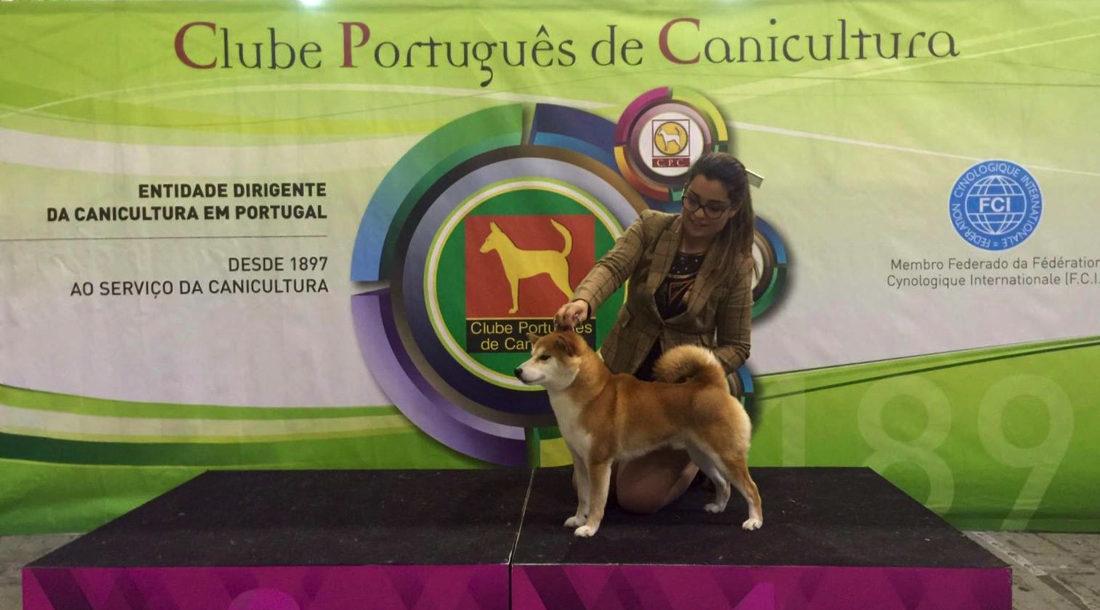 Shiba - Campeón en Oporto, Portugal