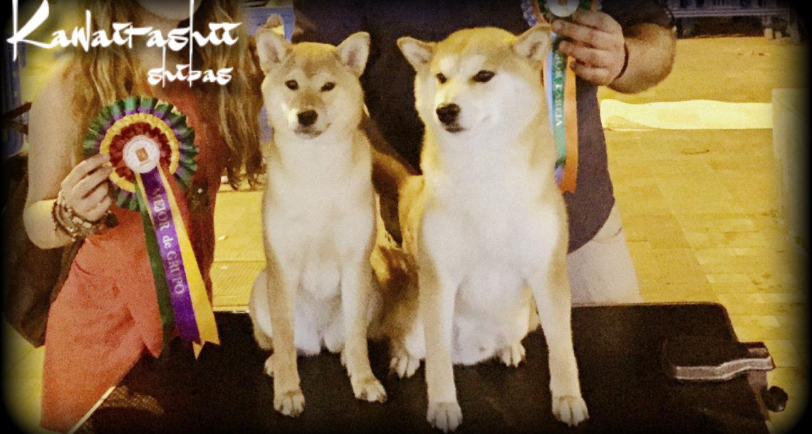 Suki & Taira Shiba Inu