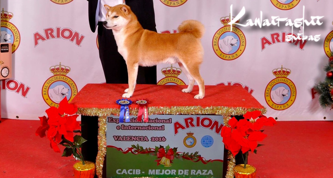Taira campeón FCI